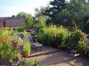 Einheimische Sträucher und Stauden für eine nachhaltige Gartengestaltung