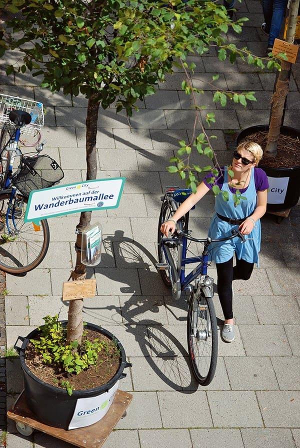 Begrünungsprojekt Wanderbaumalle für mehr Stadtgrün in München