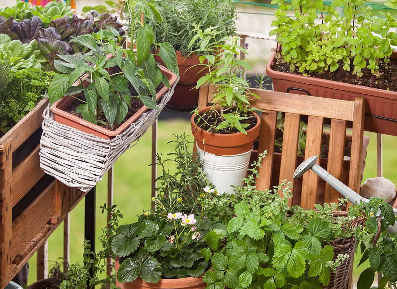 Urban Gardening in München - Balkonbepflanzung
