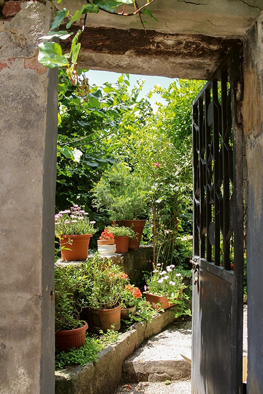 Urban Gardening in München - naturbelassender Garten