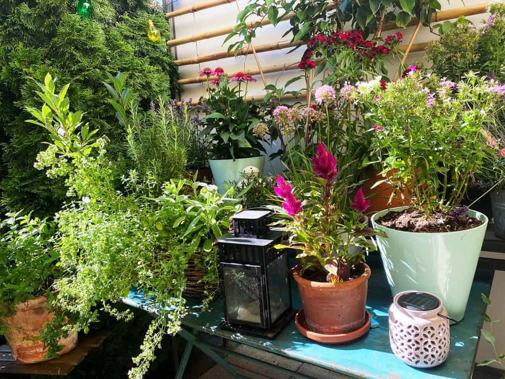 Pflanzen spielen eine wichtige Rolle, wenn man den Reihenhausgarten optisch vergrößern möchte