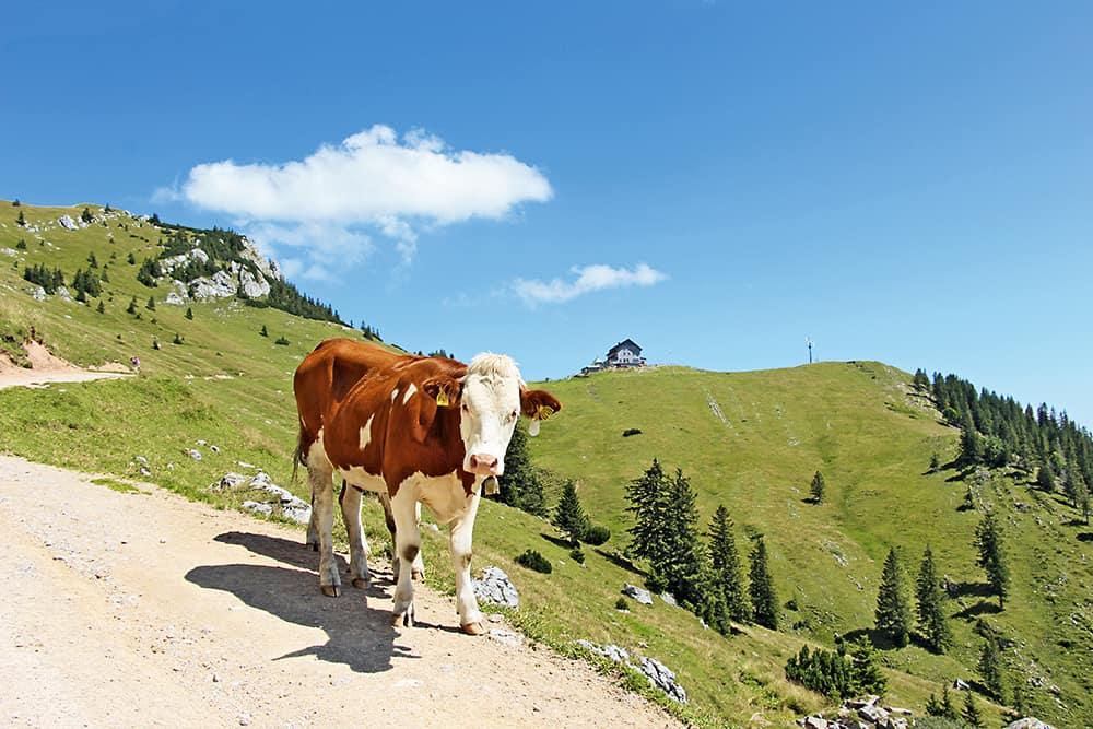 Wandern am Tegernsee und Ödberg: Wanderung zum Rotwandhaus