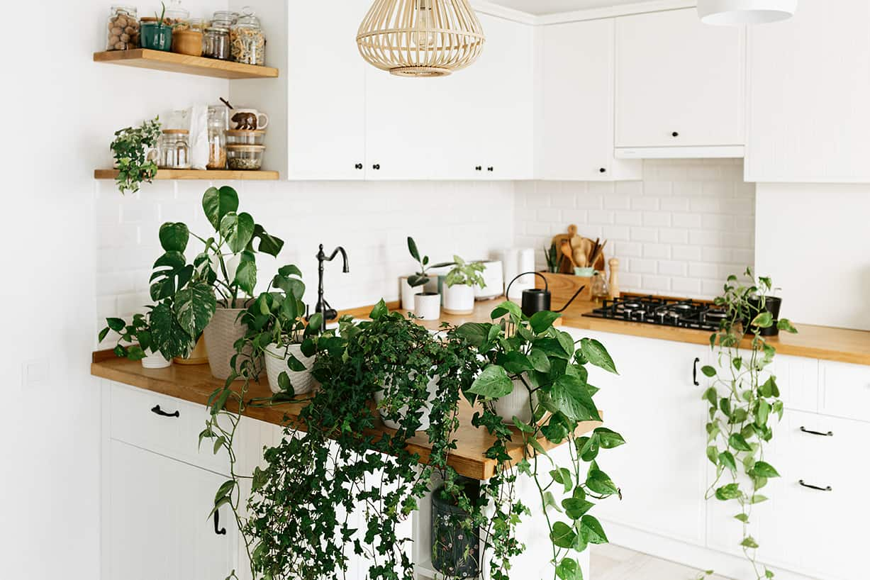 Grüne Zimmerplanzen