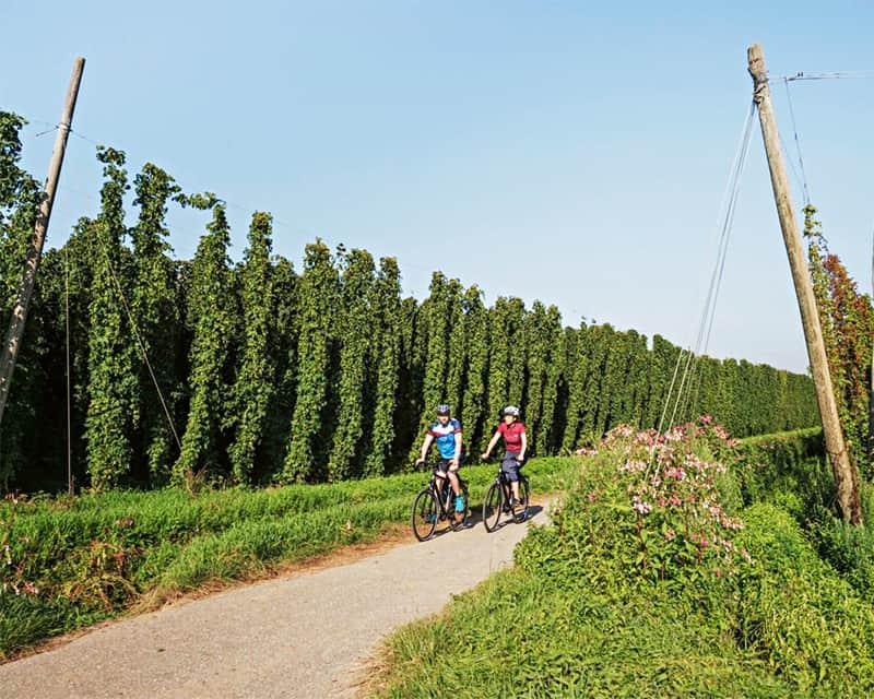 Zwei Radfahrer auf einem Feldweg, Hopfen